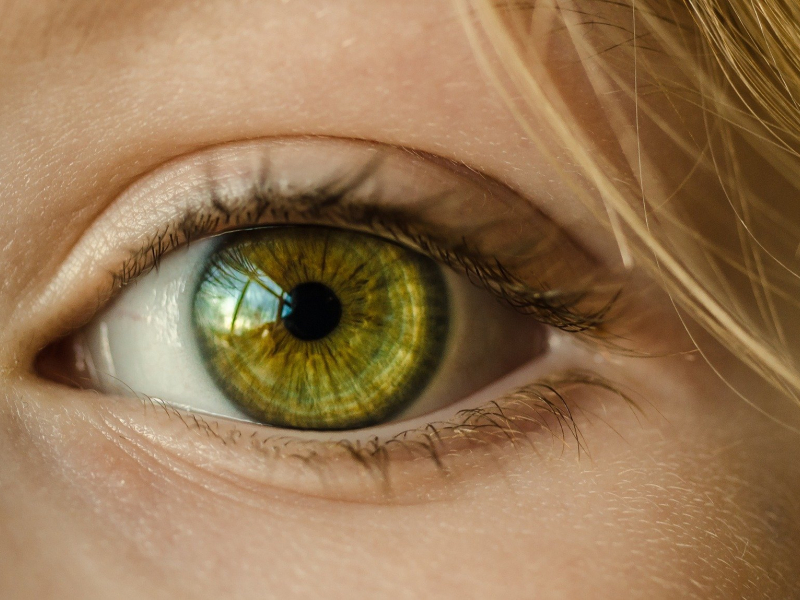 Optometry and Vision Science Research